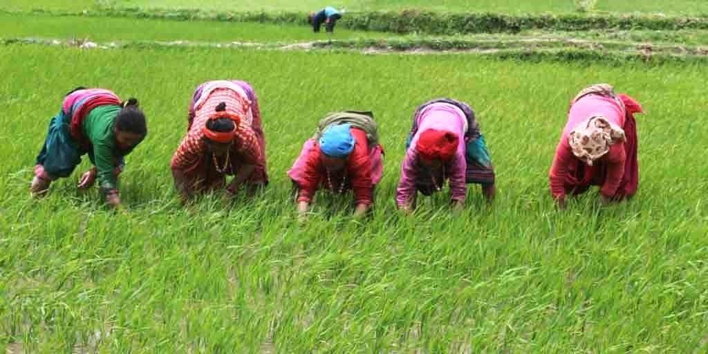 आज विश्व खाद्य दिवसः खाद्यमा सँधै परनिर्भरता